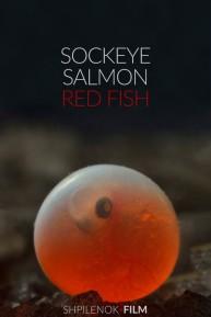 sockeye salmon-poster